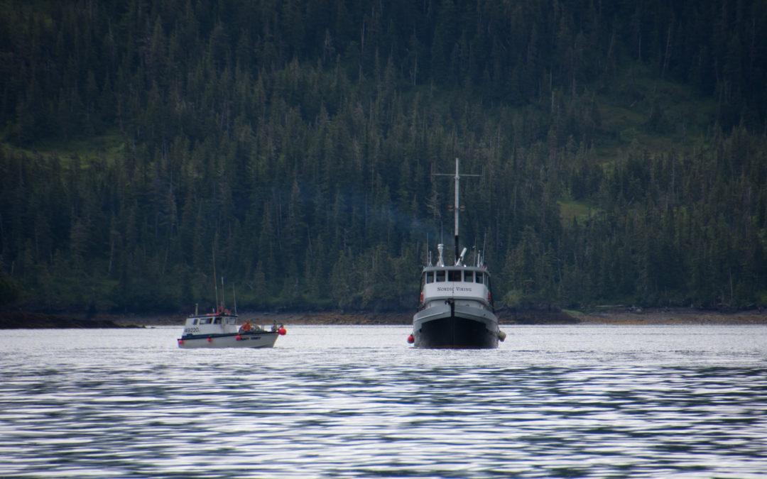 Tender de pêche au saumon