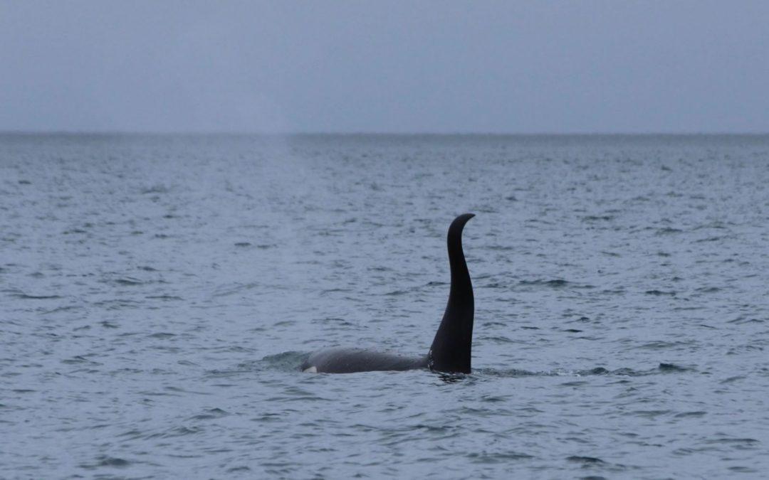 Navigation dans le Prince William Sound