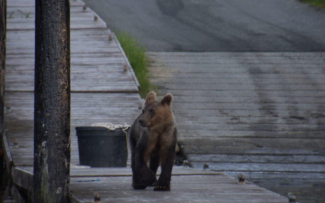 Ours Yakutat